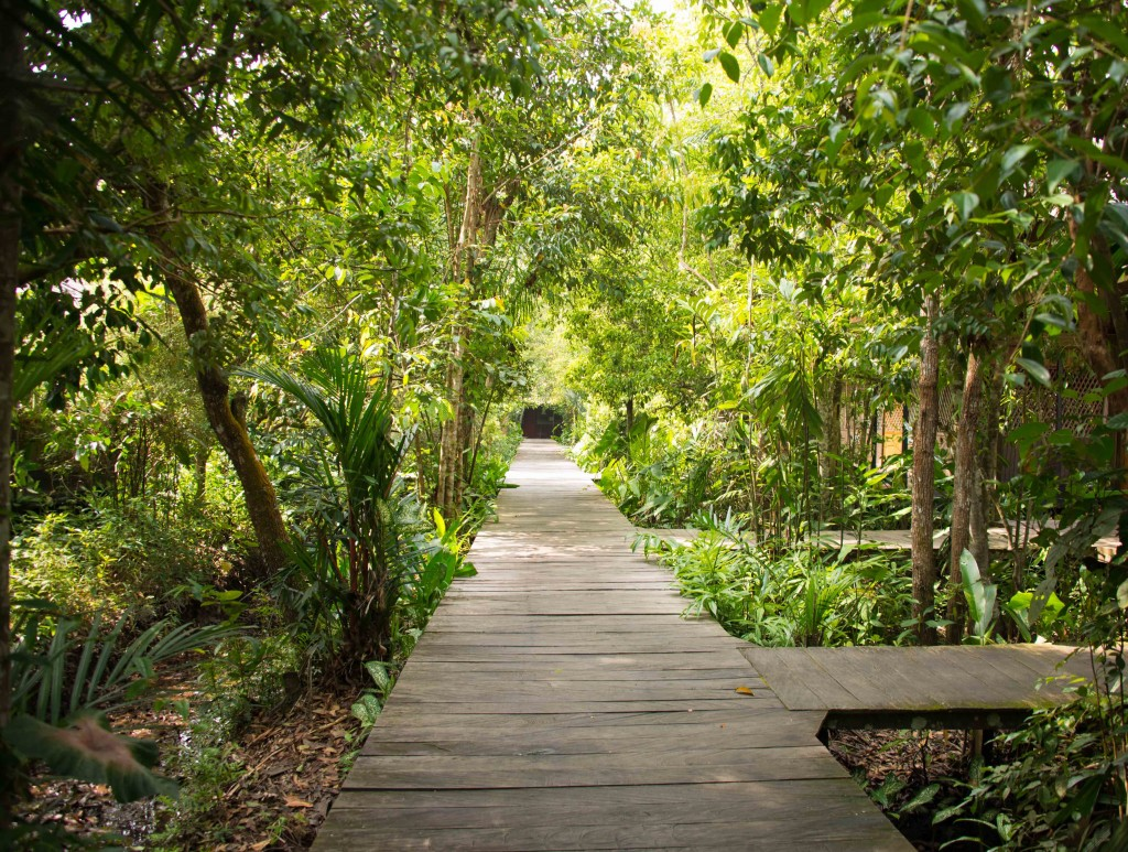 Walkways around Rimba Lodge, Tanjung Puting National Park, Kalimantan, Indonesia