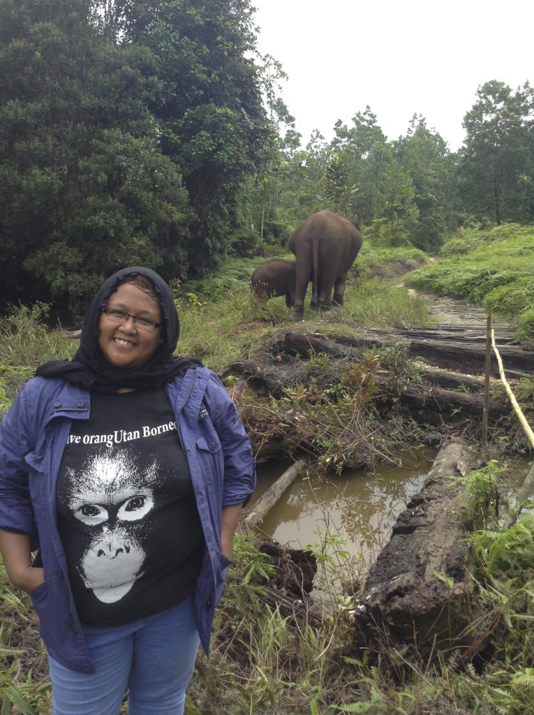 Tesso Nilo National Park Indonesia Elephant Conservation Tour